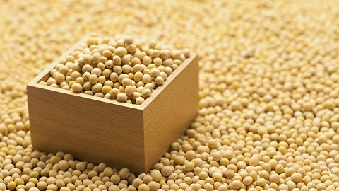 【财经数据】今年国产大豆有望增产125万吨 产量创12年高点