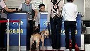 南京禄口机场正式推出犬类宠物货运托运服务
