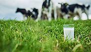 有机奶只能卖普通奶价格 中国圣牧亏损近12亿放弃部分牧场有机认证