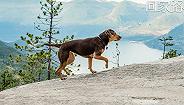 """【个人意见】《一条狗的回家路》:小狗寻找主人的""""奥德赛"""""""