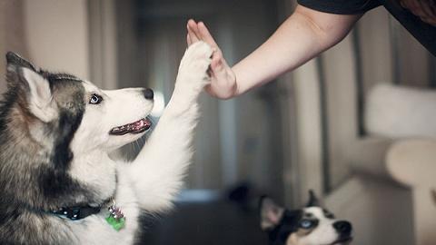 每年花5000元养宠物,年轻职场人是中国宠物经济消费主力