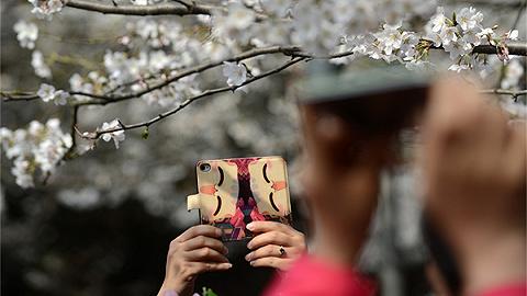 地方新闻精选 男子疑似穿和服进武大赏樱与保安冲突,校方:17年前就有规定
