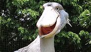 转发这只沙雕大鸟,比锦鲤还管用
