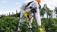 """""""最严""""食品安全改革意见出台,食用农产品将全面禁用高毒农药"""
